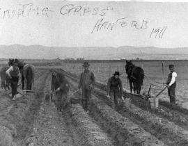 Asparagus planting at Ballygreen farm, White Bluffs, 1911. Photo courtesy of Our Hanford History.