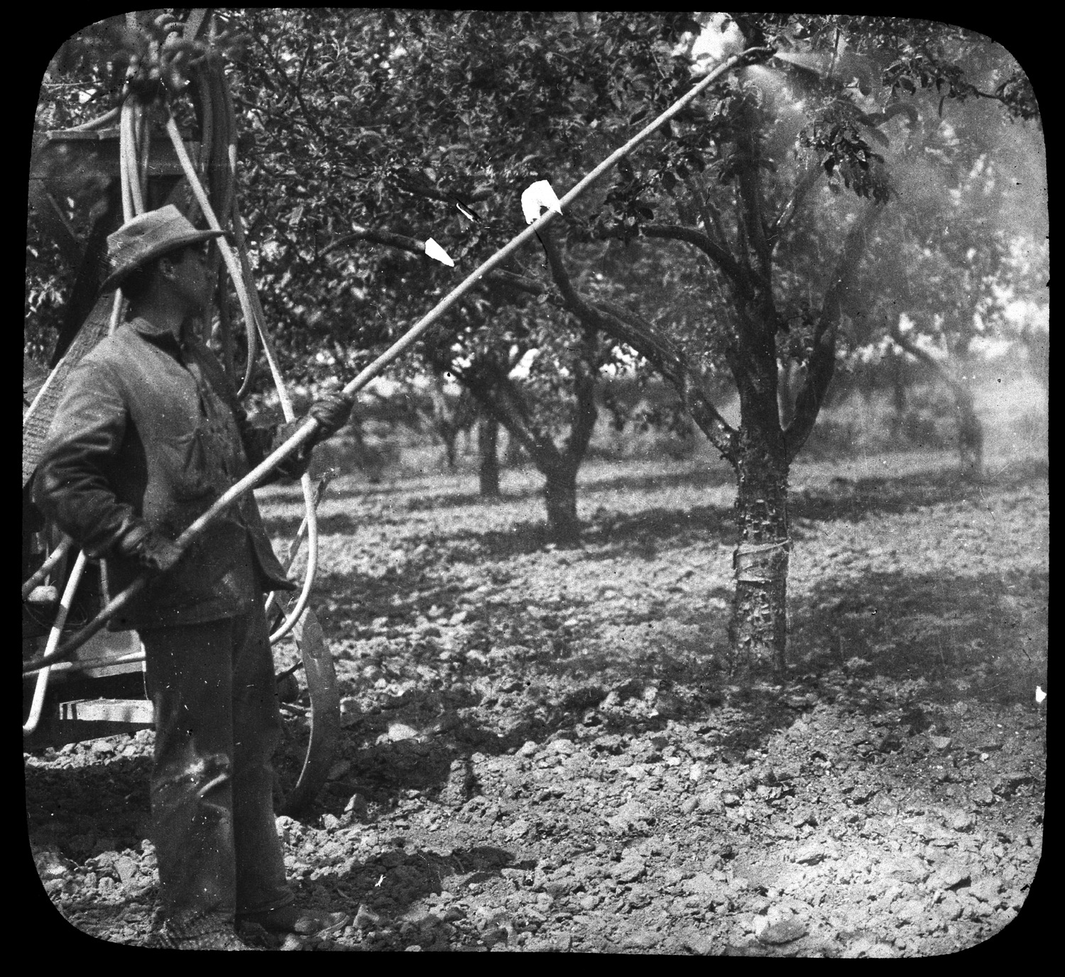 Farmer Watering His Orchard in Hanford