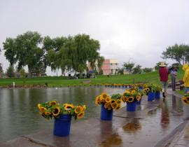 Ashley Pond with sunflowers. Photo courtesy of Democracy for New Mexico.