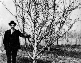 Man with fruit tree, 1932. Photo courtesy of Our Hanford History.