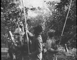 Orchard spraying, 1932. Photo courtesy of Our Hanford History.